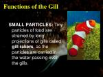 functions of the gill