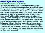 ipm program for aphids6