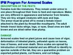 ipm program for armored scales2