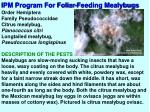 ipm program for foliar feeding mealybugs