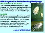 ipm program for foliar feeding mealybugs1