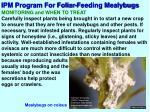 ipm program for foliar feeding mealybugs3