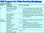 ipm program for foliar feeding mealybugs6