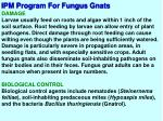ipm program for fungus gnats1