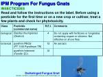 ipm program for fungus gnats4