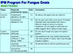 ipm program for fungus gnats6