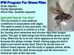 ipm program for shore flies