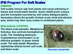ipm program for soft scales2