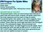 ipm program for spider mites