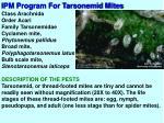 ipm program for tarsonemid mites