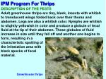 ipm program for thrips2