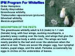 ipm program for whiteflies