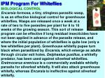 ipm program for whiteflies4