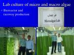 lab culture of micro and macro algae