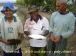 seaweed milkfish and shrimp polyculture
