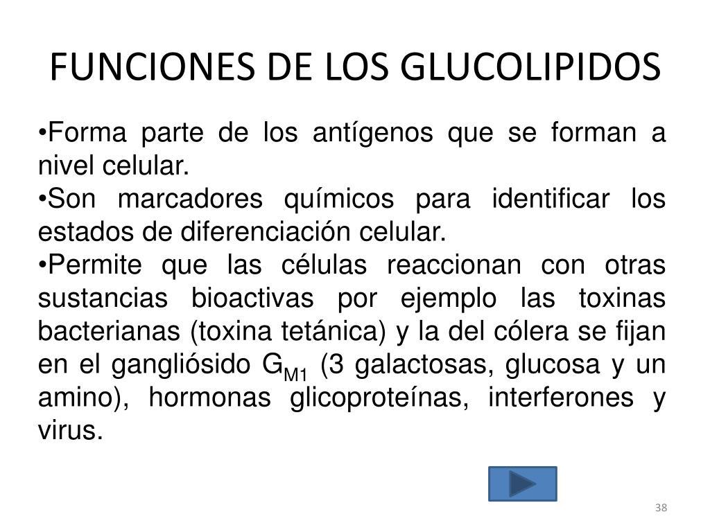 PPT - METABOLISMO DE LIPIDOS: PARTE 1 PowerPoint..