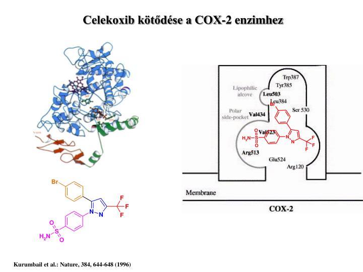 Celekoxib kötődése a COX-2 enzimhez