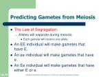 predicting gametes from meiosis