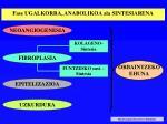 fase ugalkorra anabolikoa ala sintesiarena