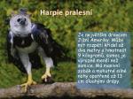 harpie pralesn