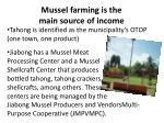 mussel farming is the main source of income