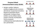 enzyme linked immunosorbent assay elisa