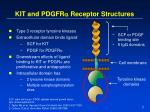 kit and pdgfr a receptor structures