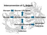 interconversion of c 6 sugars