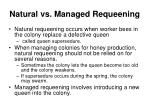natural vs managed requeening