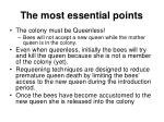 the most essential points