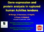 gene expression and protein analysis in ruptured human achilles tendons