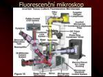 fluorescen n mikroskop