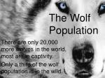 the wolf population
