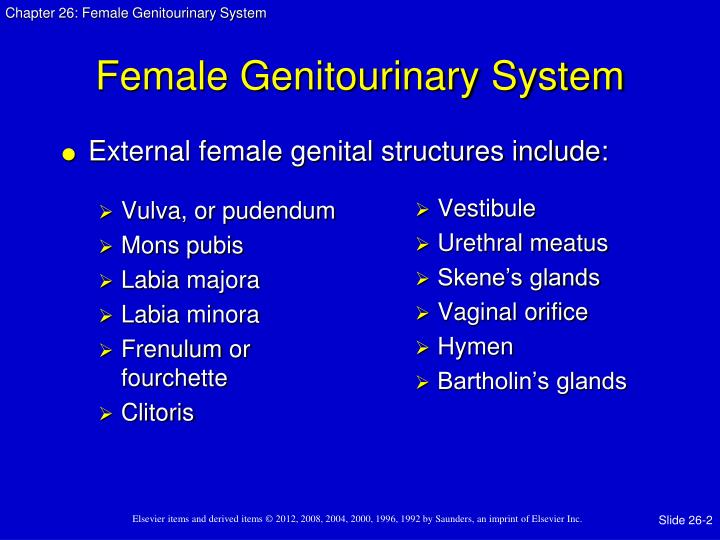 Female genitourinary system1
