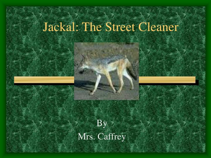 jackal the street cleaner n.