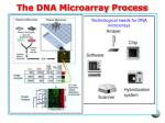the dna microarray process
