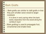 bark grafts