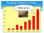 poaching of rhinos in africa