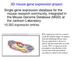 3d mouse gene expression project