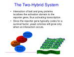 the two hybrid system