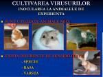 cultivarea virusurilor inocularea la animalele de experienta