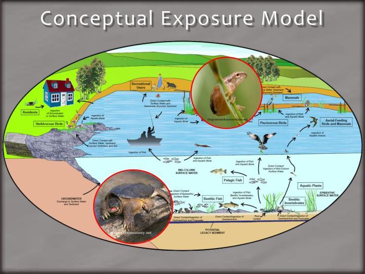 Conceptual exposure model