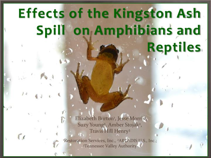 Effects of the kingston ash spill on amphibians and reptiles
