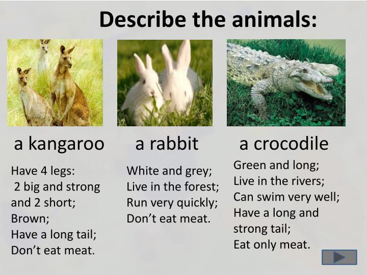 Describe the animals: