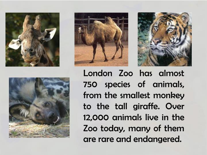 London Zoo has almost 750 species of animals, from the smallest monkey to the tall giraffe.