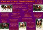 wallace star thoroughbred