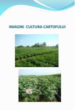 imagini cultura cartofului