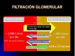 filtraci n glomerular