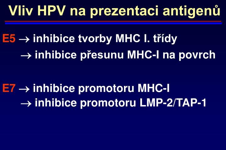 Vliv HPV na prezentaci antigenů