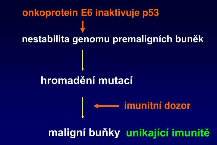 onkoprotein E6 inaktivuje p53